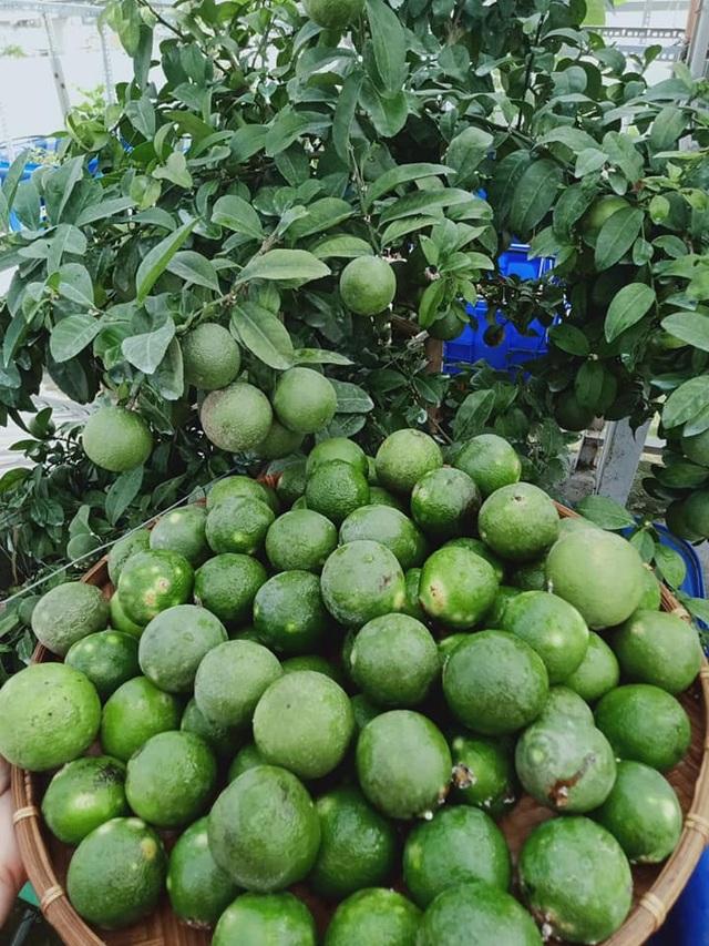 Cả gia đình ở Sài Gòn thỏa thích ăn trái cây nhờ khu vườn trên không - 13