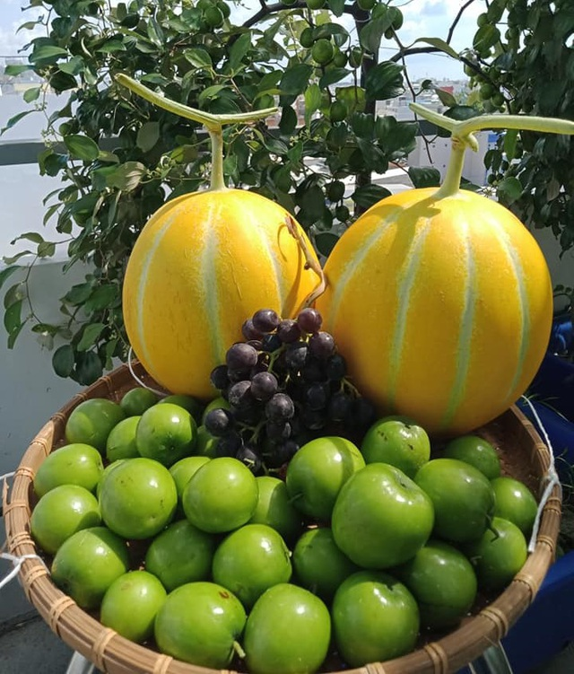 Cả gia đình ở Sài Gòn thỏa thích ăn trái cây nhờ khu vườn trên không - 14