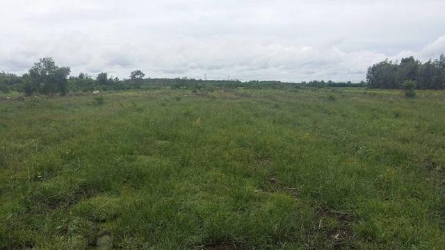 Dự án Khu đô thị Đại học Quốc tế biến thành bãi cỏ mọc hoang