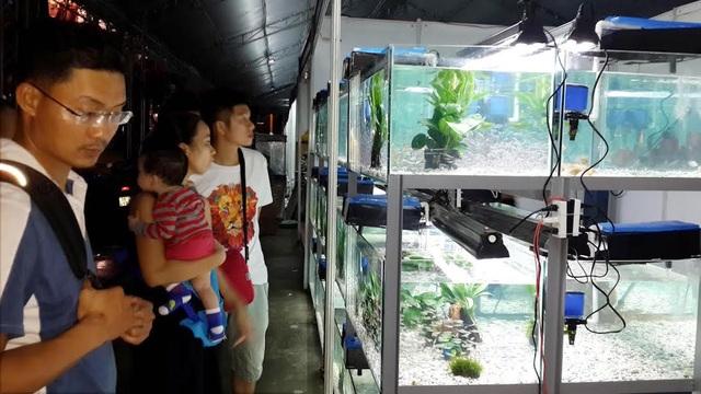 Người dân TPHCM quan tâm đến các mô hình nuôi cá cảnh