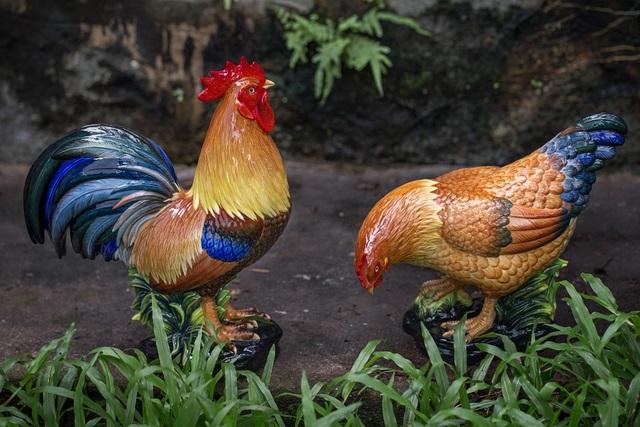 Gà trống Đại Cát khí phách như một nam tử, bên cạnh là gà mái An Gia dịu hiền như một người mẹ.