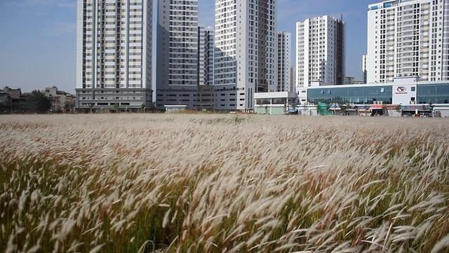So với những bãi cỏ quen thuộc ở Hà Nội, bãi cỏ tranh Linh Đàm là địa chỉ mới, sơ khai nên lượng người đến đây không đông như những nơi khác.