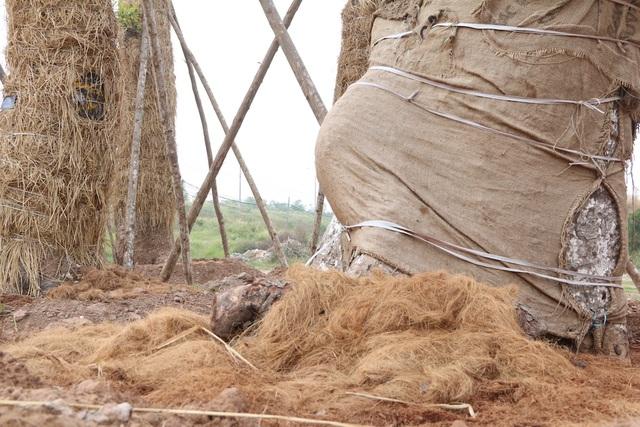 Do địa điểm đánh chuyển cây xanh gần đường giao thông nên đơn vị thi công không thể sử dụng, huy động các loại máy móc hiện đại mà phải dùng phương pháp thủ công. Các cây xà cừ đều được công nhân cắt tỉa và tiến hành bứng gốc bằng tay. Sau đó dùng cần cầu để đưa lên xe tải vận chuyển về vườn ươm ở Văn Giang. Quá trình di dời cây xanh được thực hiện một cách cẩn trọng, tỉ mỉ trong khoảng thời gian hơn 1 tháng.