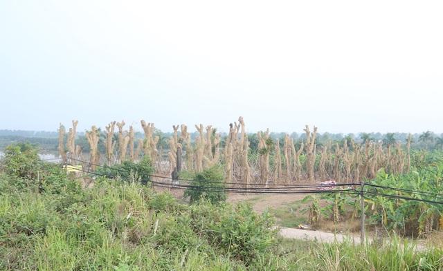 Để phục vụ cho tuyến đường sắt Metro Nhổn – Ga Hà Nội, 109 cây xà cừ ven hồ Thủ Lệ, trong đó có 34 cây xà cừ cổ thụ đã bị đánh chuyển, di dời về vườn ươm ở Văn Giang (Hưng Yên). Đây được xem là dự án đầu tiên di chuyển cây xanh để giải phóng mặt bằng thay vì chặt hạ.