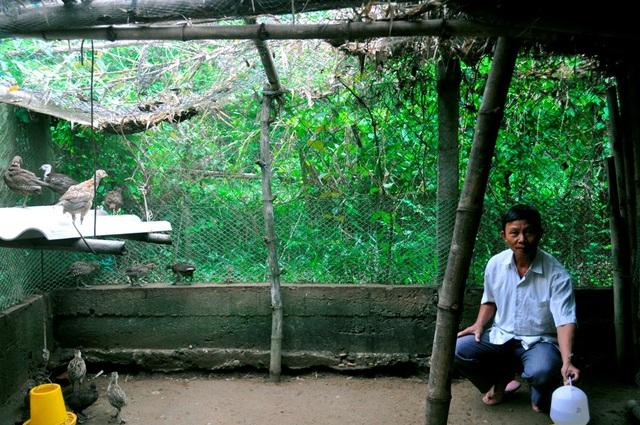 Ông Trần Văn Chức bên trại nuôi chim trĩ của mình