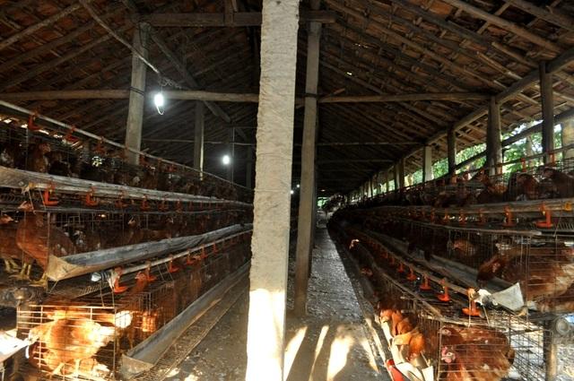 Mỗi ngày trại gà của ông Ảnh có thể xuất bán hơn 400 ký trứng/ngày. Sau khi trừ chi phí doanh thu đạt 300-400 triệu/năm