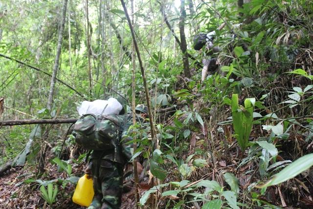 Cán bộ huyện Tây Giang băng rừng vào khu rừng đỗ quyên