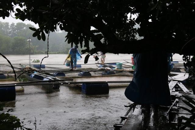 Theo người dân nuôi cá lồng trên sông Tam Kỳ, họ không nghe tin hồ Phú Ninh xả lũ nên bị thiệt hại nặng