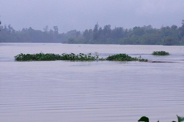 Nước lũ về nhanh và ngập trắng đồng khiến nười dân trở tay không kịp