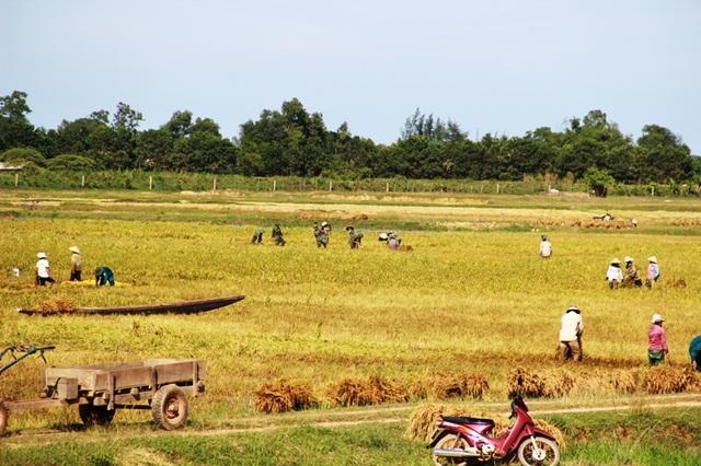 Bộ đội xuống đồng giúp dân gặt lúa chống úng - 8