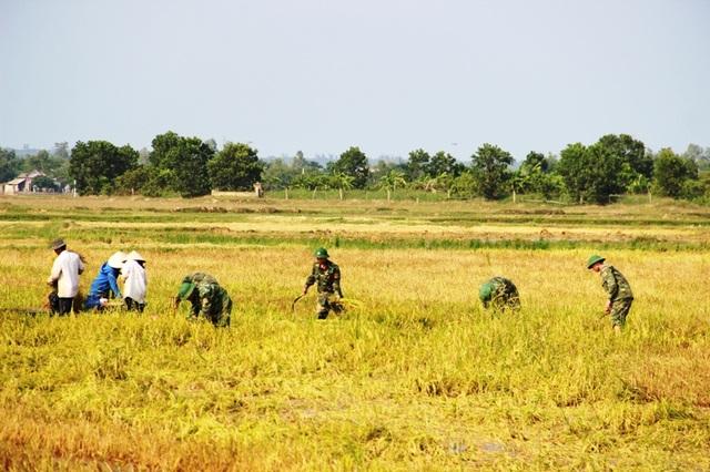 Cán bộ, chiến sĩ quân đội giúp bà con thu hoạch lúa chống úng