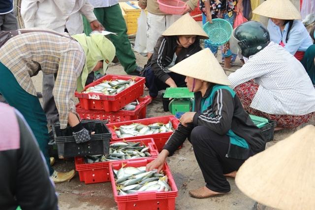 Các loại cá nục vẫn có giá thấp, chưa được cải thiện