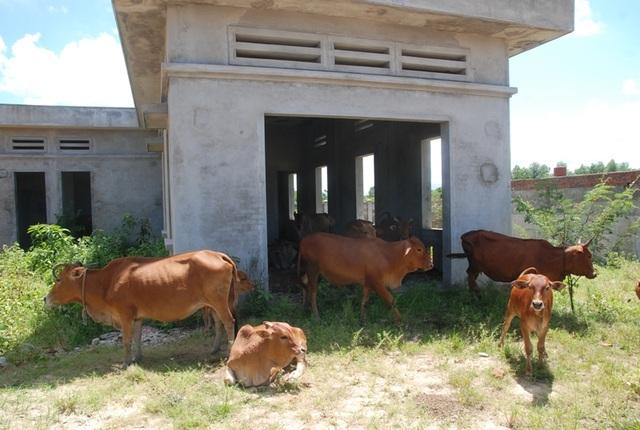 Công trình bỏ hoang đã lâu nên người dân địa phương lấy làm nơi nuôi nhốt gia súc