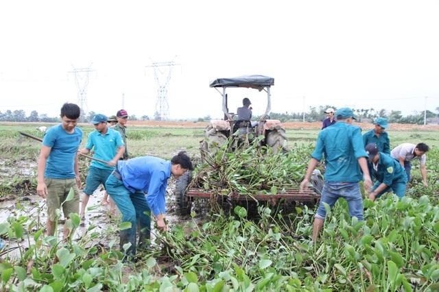 Các đoàn viên xung kích dọn sạch bèo để nông dân có ruộng sạch sẽ canh tác