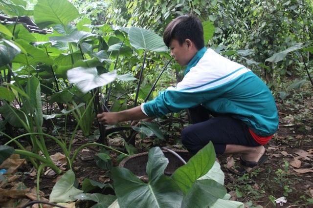 Cháu An giúp chị hái rau trong vườn để nấu cho lợn, đỡ đần cho mẹ lúc đau ốm
