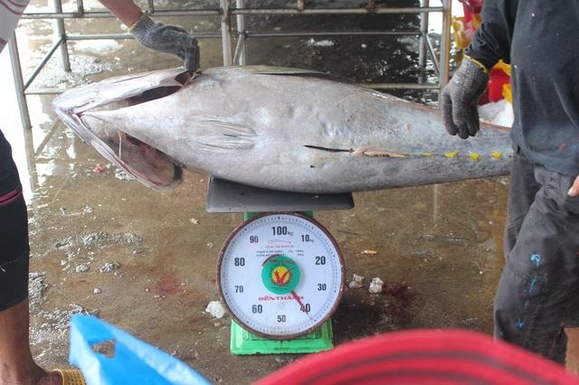 Hiện cá ngừ đại dương tăng 10.000 đồng, đạt 105.000 đồng/kg khiến ngư dân phấn khởi