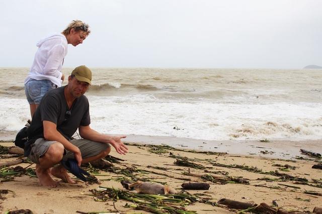 Du khách nước ngoài bên một xác động vật bị chết dạt vào bờ