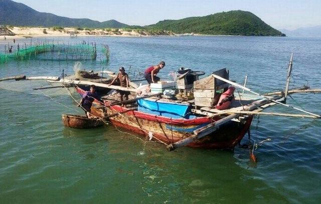 Trước hiện tượng bất thường này, dù chưa rõ nguyên nhân nhưng người dân đổ xô ra biển vớt hàng tấn cá - Ảnh: H.X.