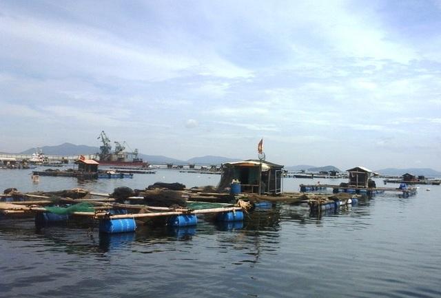 Khu vực nuôi cá lồng của người dân xã Nghi Sơn, huyện Tĩnh Gia.