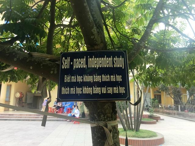 Những bảng song ngữ Anh - Việt về nhiều chủ đề được gắn ở các gốc cây
