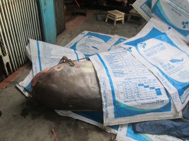 Do nhiều người hiếu kỳ đến xem, gia đình bà V. dùng các bao tải che cá lại