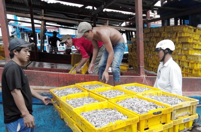 Bà Hồ Thị Liên, Chủ tịch Hội Nước mắm Phú Quốc, cho biết: nước mắm truyền thống tại Phú Quốc chỉ có cá cơm than và muối. (khách đến nhận cá cơm mà các thuyền vừa đánh bắt từ biển về)