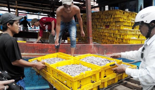 Thứ trưởng Bộ NN-PTNT Vũ Văn Tám cũng cho biết, sẽ đề xuất với Chính phủ giúp cho tỉnh Kiên Giang có điều kiện bảo vệ nguồn cá cơm thông qua việc thành lập Trạm Kiểm ngư tại huyện Phú Quốc.