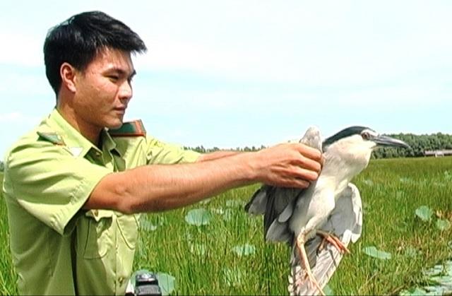 Cán bộ Kiểm lâm thả chim Nhan điển về Vườn Quốc gia Tràm Chim