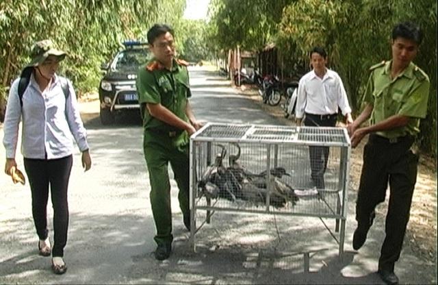 Đây là số động vật hoang dã bị cơ quan Công an huyện Tam Nông bắt giữ vào rạng sáng 30/11