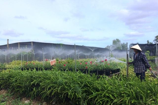 Ngành chức năng khuyến cáo người dân nên làm giá mát và lắp đặt hệ thống phun sương tự động để khi gặp cảnh mưa dầm hay nắng gay gắt... hoa kiểng vẫn phát triển tốt