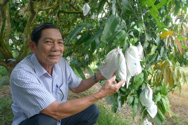 Ông La Văn Hùng – Chủ nhiệm Canh Tân Hội quán ở xã Hòa An, TP Cao Lãnh cho biết, sản lượng xoài cát chu trong câu lạc bộ của ông giảm khoảng 100 tấn