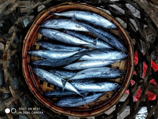 Rổ cá nục ánh xanh mới về từ chuyến ra khơi sẽ khiến du khách nghĩ gì? Nghĩ về những cuốn bánh tráng ngon lành, về tô canh ngọt vị hay về nỗi biết ơn người ngư dân, về sự hàm ơn đất nước đã có những sản vật đơn giản nhưng kỳ vĩ thế này?
