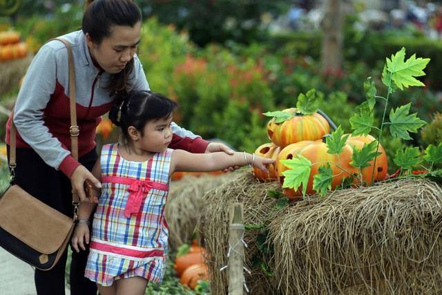 Một em nhỏ được phụ huynh dẫn đi tham quan khu vườn bí ngô.