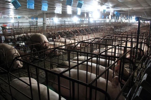 Từ tay trắng sở hữu trang trại cho thu nhập tiền tỷ - 4