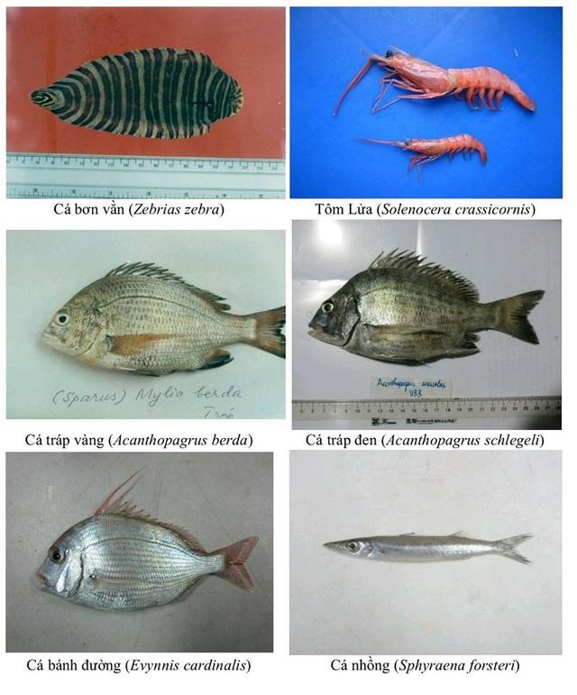 Nhận diện hơn 150 hải sản tầng đáy miền Trung khuyến cáo không sử dụng - 6