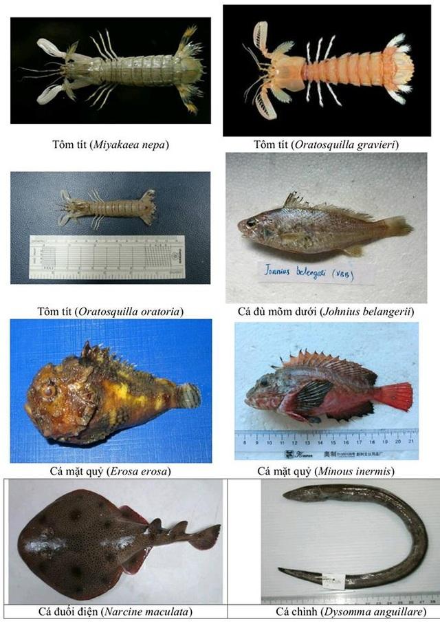 Nhận diện hơn 150 hải sản tầng đáy miền Trung khuyến cáo không sử dụng - 7