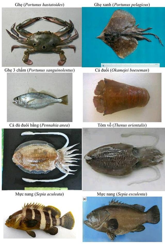 Nhận diện hơn 150 hải sản tầng đáy miền Trung khuyến cáo không sử dụng - 8