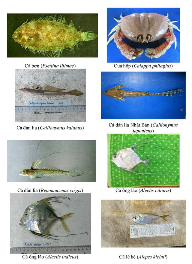 Nhận diện hơn 150 hải sản tầng đáy miền Trung khuyến cáo không sử dụng - 11