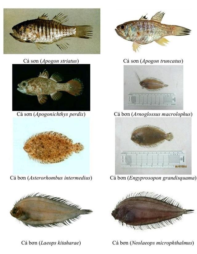 Nhận diện hơn 150 hải sản tầng đáy miền Trung khuyến cáo không sử dụng - 14