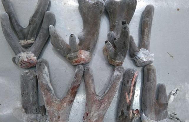 Nhung nai dùng chữa chứng bất lực ở nam giới và thiếu sức sống ở nữ giới