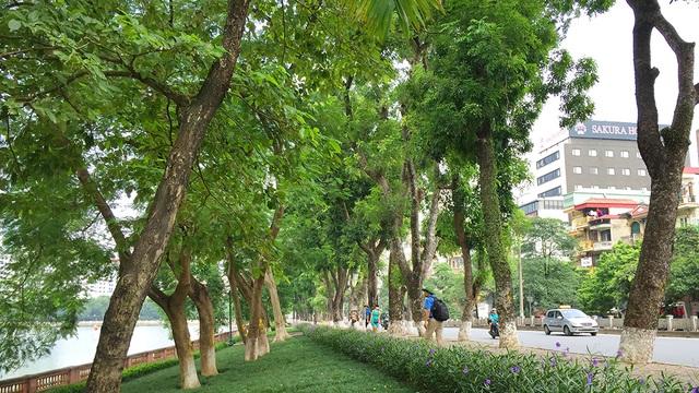 Đoạn đường tiến hành xử lý cây xanh từ đền Voi Phục đến đối diện ngõ 575 phố Kim Mã.