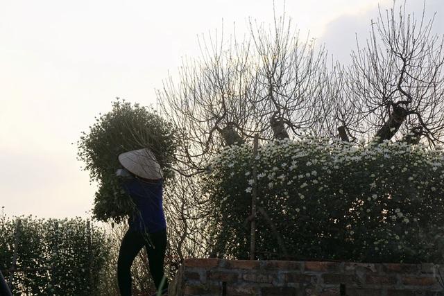 Nghề làm vườn trồng hoa Nhật Tân đã phát triển hơn nhờ kĩ thuật và sự hỗ trợ của các loại phân bón và thuốc trừ sâu. Tuy vậy, nhân lực chủ yếu chỉ là lớp người lớn tuổi.