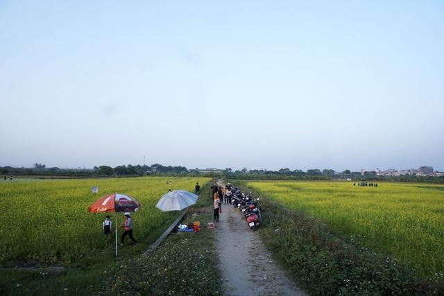Cánh đồng trồng cải nằm ngay phía trước khuôn viên trường Học viện Nông nghiệp Việt Nam, vào mùa hoa nở rộ thu hút rất đông thanh niên về đây chụp ảnh cùng hoa.