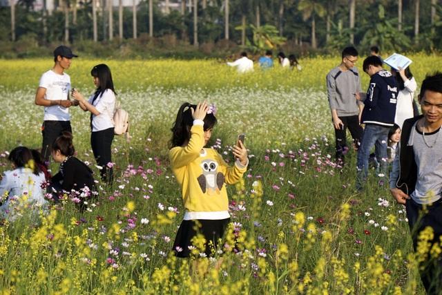 Rộ phong trào chụp ảnh trong vườn hoa cải bát ngát tuyệt đẹp - 13