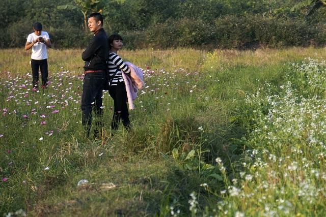 Rộ phong trào chụp ảnh trong vườn hoa cải bát ngát tuyệt đẹp - 15
