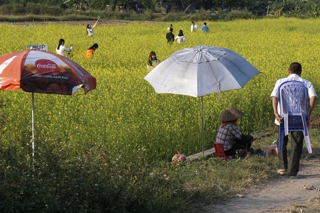 Cánh đồng hoa bát ngát không mọc tự nhiên mà của các hộ gia đình nơi đây chăm trồng chuyên cho thuê để chụp ảnh, vì thế khi vào mùa hoa nở tuyệt đẹp.