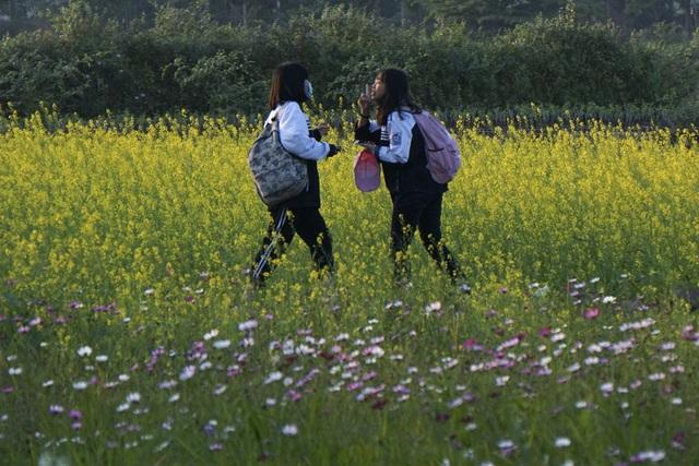 Rộ phong trào chụp ảnh trong vườn hoa cải bát ngát tuyệt đẹp - 3