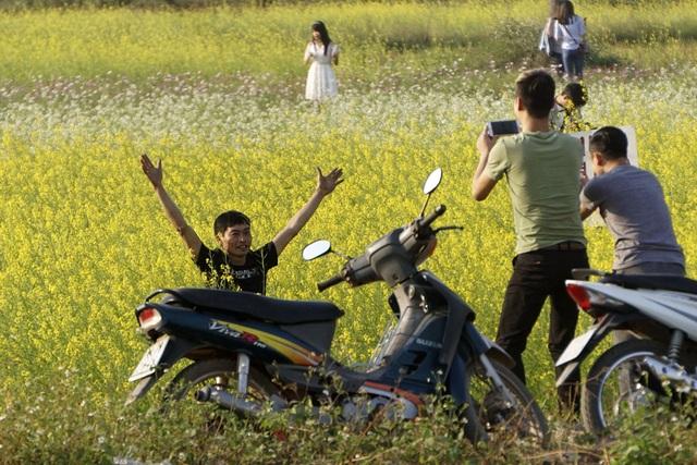 Rộ phong trào chụp ảnh trong vườn hoa cải bát ngát tuyệt đẹp - 4