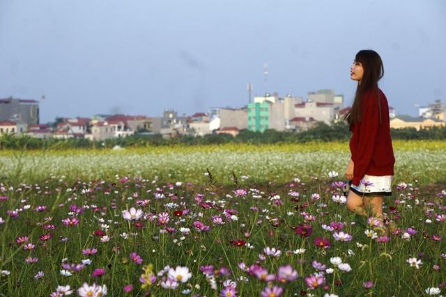 Nhiều loại hoa, nhiều màu sắc rất dễ tạo ra một bức ảnh bắt mắt.
