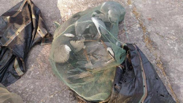 Đồng thời trên chiếc xe lực lượng chức năng phát hiện 10 con chim (chưa rõ chủng loại), không có giấy tờ hợp lệ.